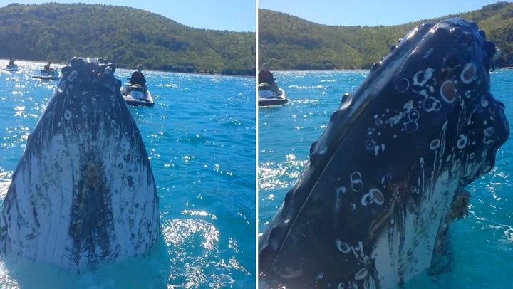 Turistene fikk nærkontakt med leken hval