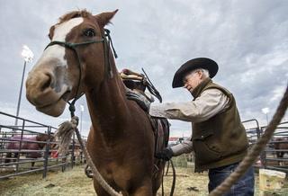 NFR Preps Livestock for the Limelight