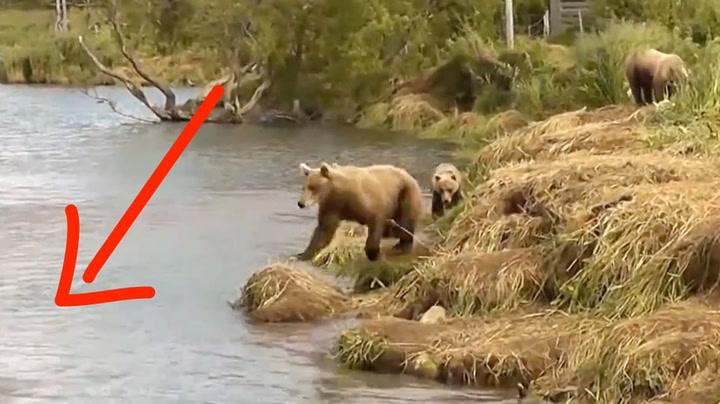 Skrubbsultne bjørner med lykketreff i elva