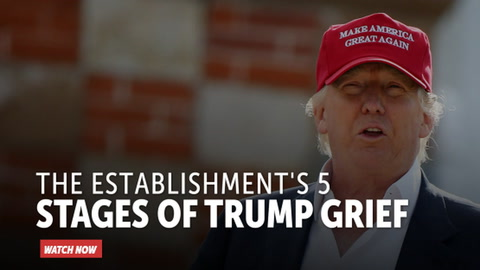 The Establishment's 5 Stages of Trump Grief