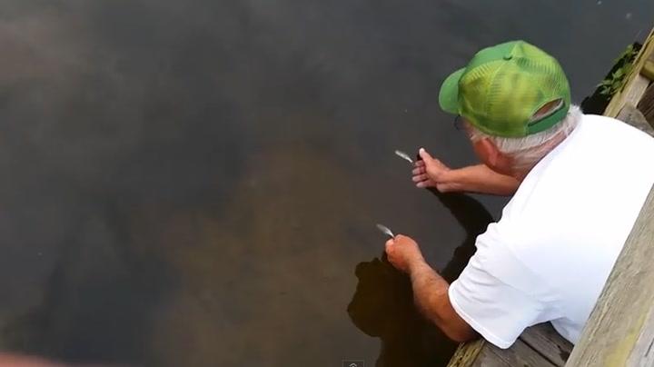 Fanger fisk med bare hendene