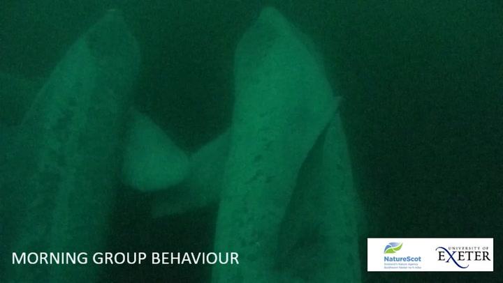 Animal-towed cameras show secret life of basking sharks