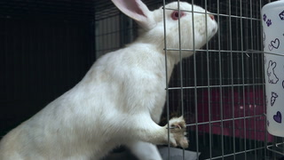 Things to remember when adopting a rabbit this Easter season