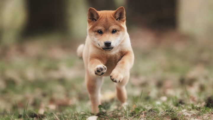There's Now Almost Zero Correlation Between Dogecoin and Bitcoin