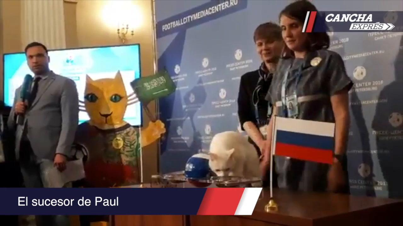 Video: Cancha Exprés en el Mundial