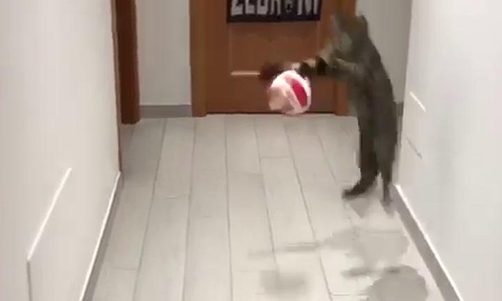 Este gato puede sacarle el puesto a Ter Stegen