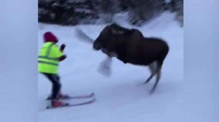 Her blir Marie (17) sparket i hodet av elg