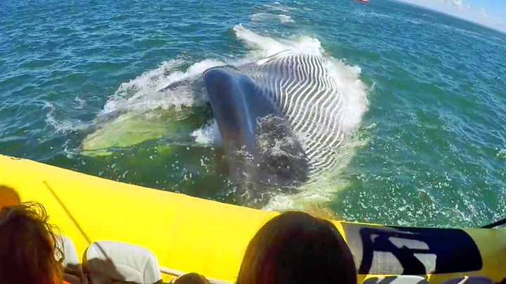 Turister fikk nærkontakt med gigantisk hval