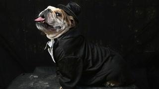 County employee bought dog tuxedo, diamond bracelet with county credit card