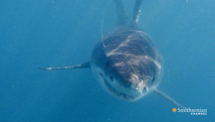 The Shark Attacks That Were the Inspiration for Jaws