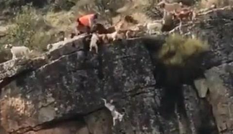 Una decena de perros caen al vacio por atrapar un venado