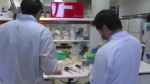 Científicos peruanos buscan producir en masa un test rápido de covid-19