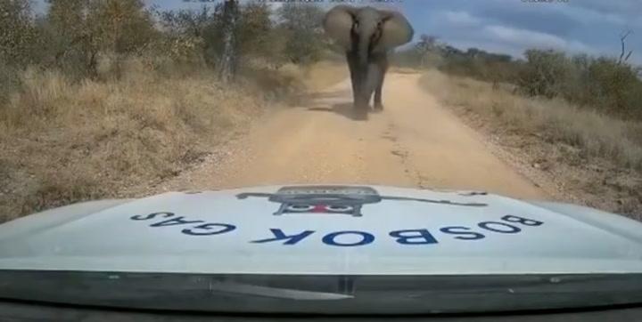 Un elefante embiste un coche cargado de combustible en una reserva en Sudáfrica