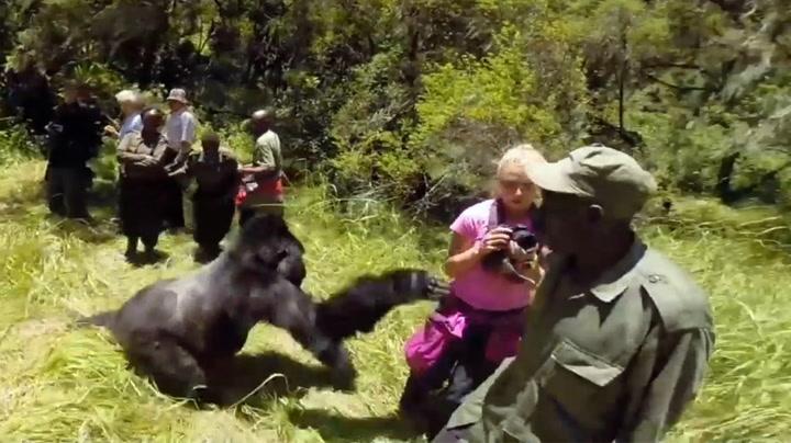 Ektepar var på bryllupsreise - ble dyttet i bakken av gorilla
