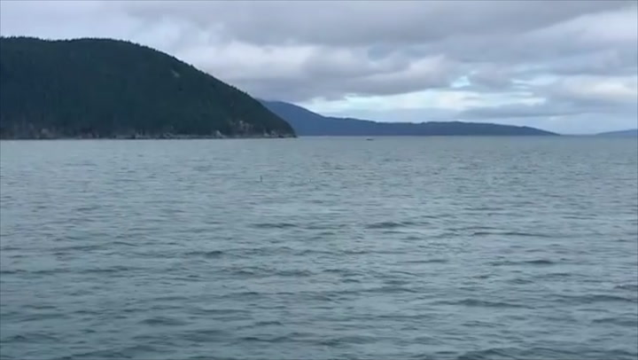 A cloudy day for whale spotting