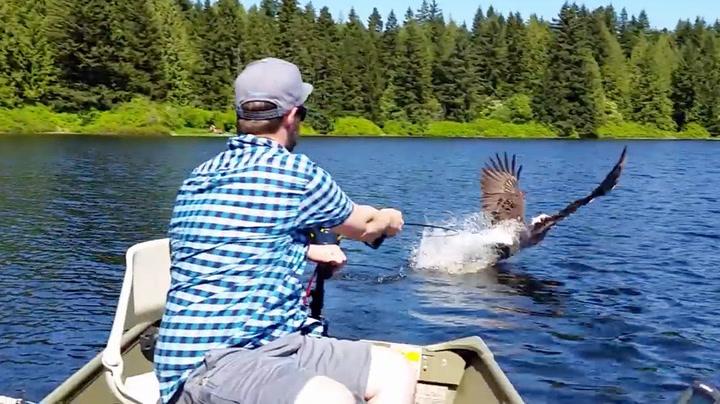 Ørn gjorde livet til fiskeren veldig surt
