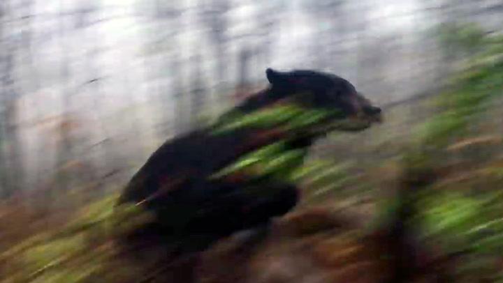 Jeger nesten løpt ned av skremt bjørn