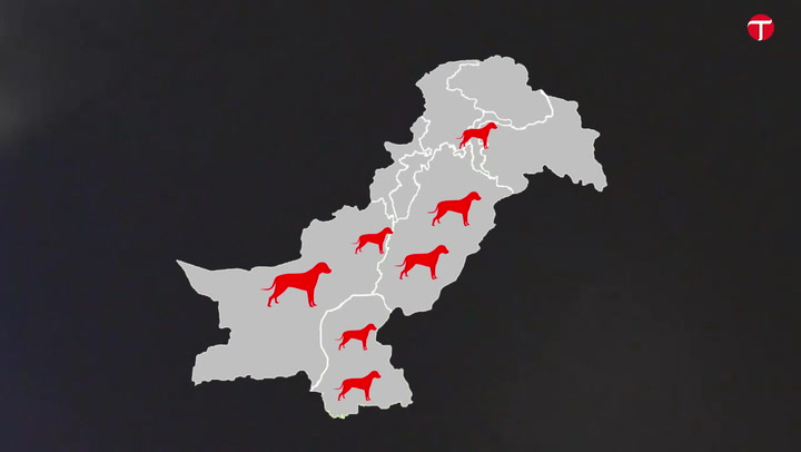 VIDEO EXPLAINER: Do animal rights exist in Pakistan?
