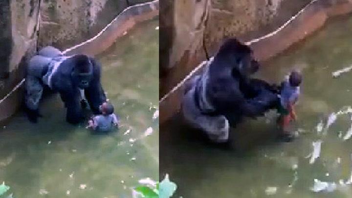 Dyrepark-sjef: – Han ville ikke slått barnet i hjel