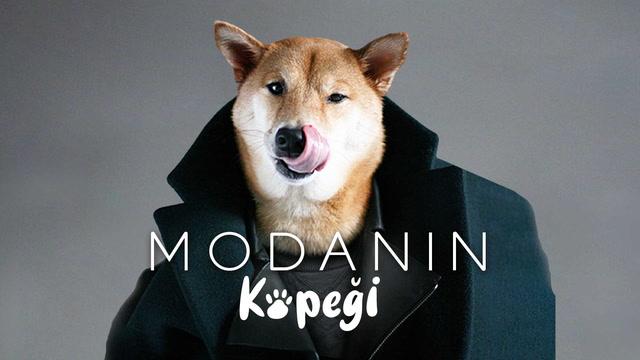 Modanın köpeği