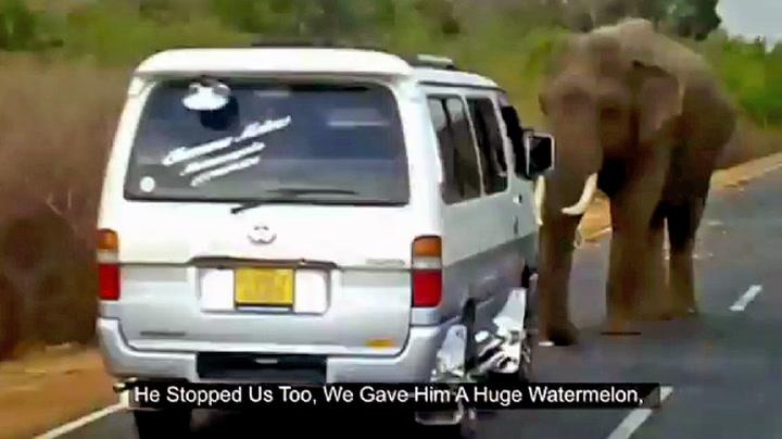 Elefant krever  «bompenger»