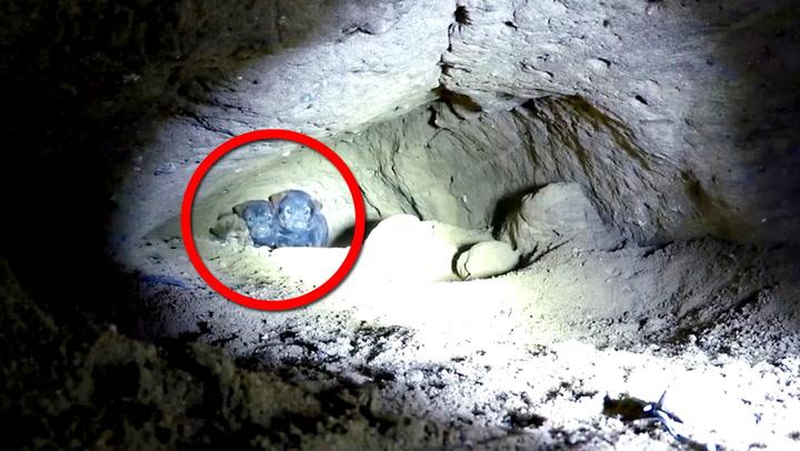 Fra en dyp grotte høres små skrik – se hva han finner på innsiden