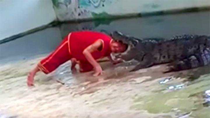 Stikker hodet inn - så glefser krokodillen til