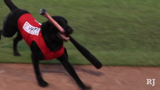 The Bat Dog Of The Las Vegas 51s