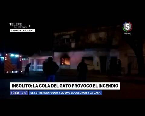 Un gato se acercó demasiado a una cocina, se le prendió fuego la cola y causó un incendio