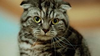 Slakter kattebruken til FINN