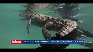Video viral: Buzo se graba nadando con enorme cocodrilo marino