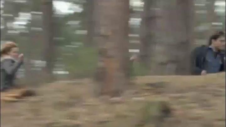 'Forest Run'
