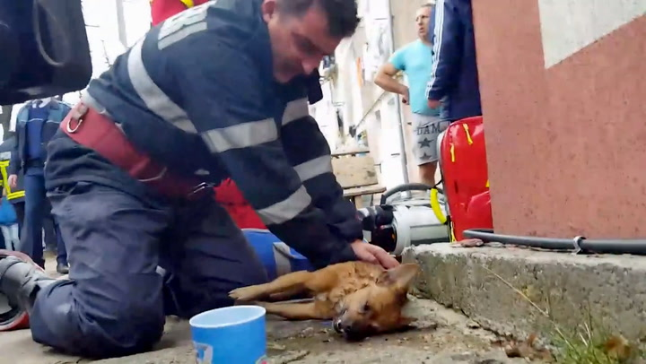 Se det rørende øyeblikket brannmannen redder hundens liv