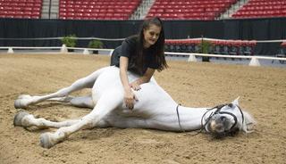 Royal horses to appear at show at South Point