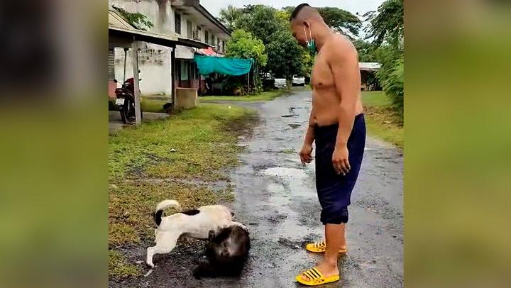 หนุ่มอัดคลิปสอนเคล็ด (ไม่) ลับ เมื่อน้องหมากัดกัน ต้องเจอแบบนี้