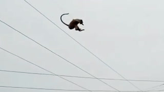 Apen tar sats - fra 50 meters høyde