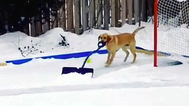 Dette er trikset du vil lære hunden din