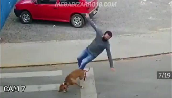 Un perro 'atropella' a un hombre en plena calle