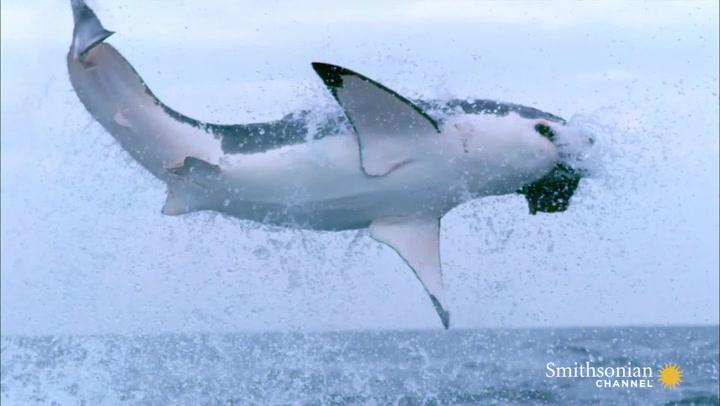 The Secret of a Shark's Eyes