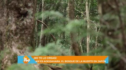 La Red: El misterio del bosque de la muerte en Japón. Programa completo del 16 de octubre de 2018