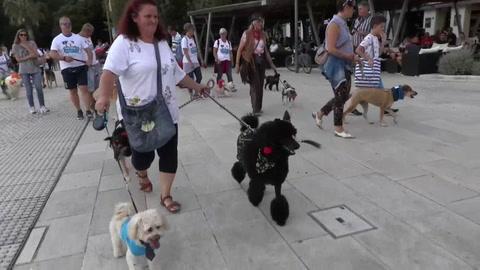 Una localidad croata se promociona como destino para turistas con perros