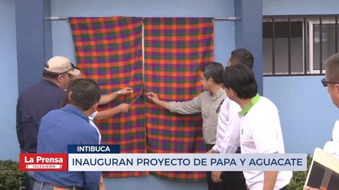 Inauguran proyecto de papa y aguacate