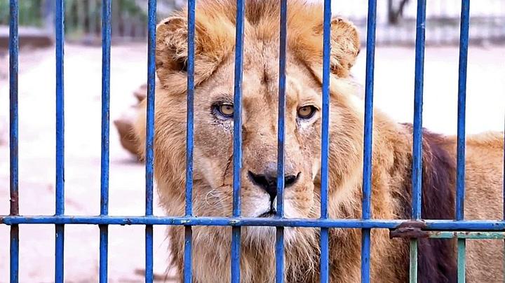 Forlatt i en nedlagt dyrepark – så kom redningen