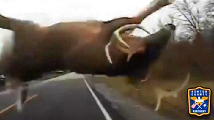 Hjort i full fart skremte vettet av politiet