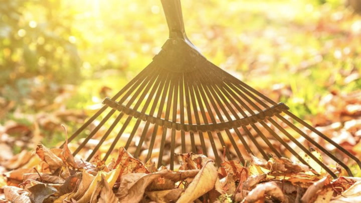 5 Essential Tasks to Tackle in Your Yard This Fall