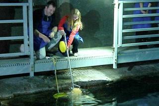 Shark feeding fun for Fin-atics