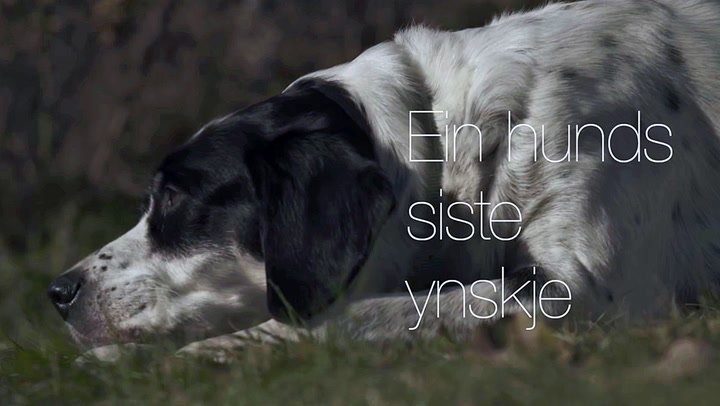 «En hunds siste ønske»