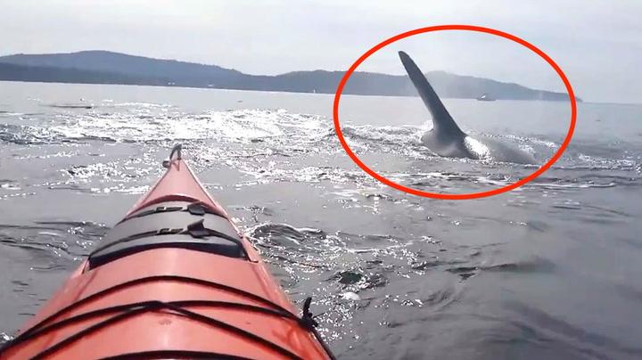 – Den er under båten. Herregud!
