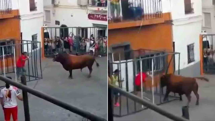 Mannen tror han står trygt i buret, men oksen har andre planer