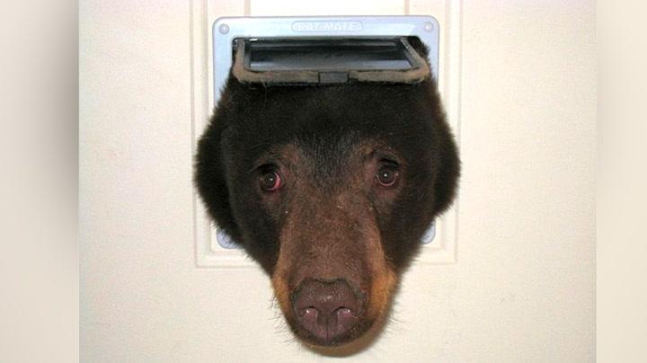 Sjekk hvem som titter inn gjennom kattedøren